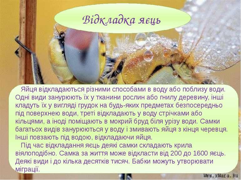Яйця відкладаються різними способами в воду або поблизу води. Одні види занур...