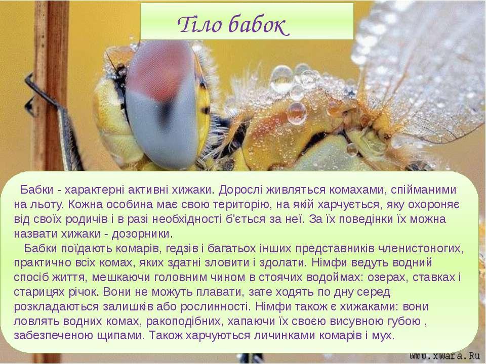 Бабки - характерні активні хижаки. Дорослі живляться комахами, спійманими на ...