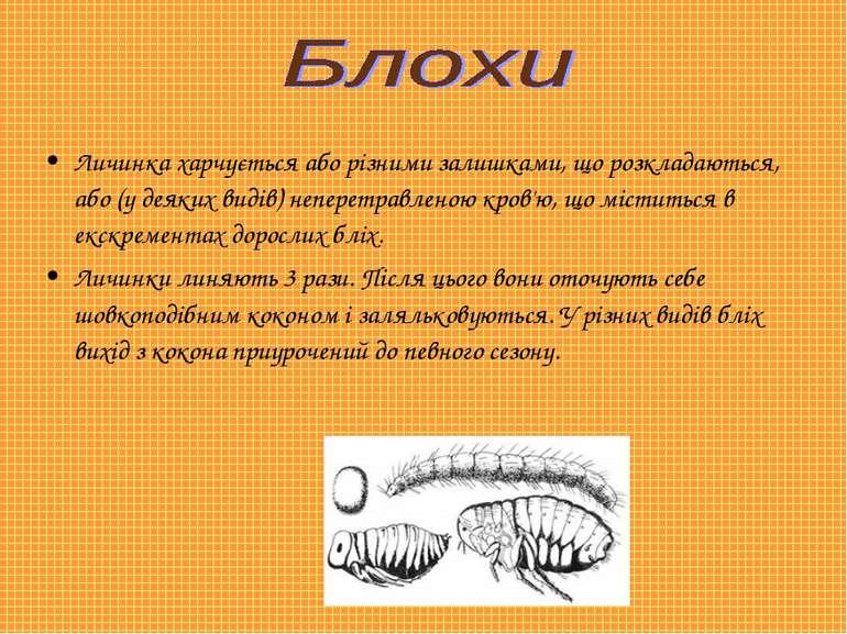 Личинка харчується або різними залишками, що розкладаються, або (у деяких вид...