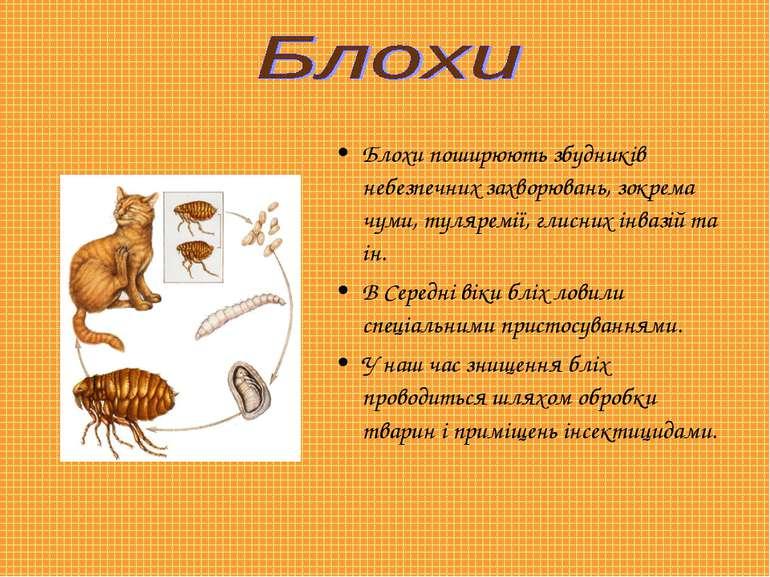 Блохи поширюють збудників небезпечних захворювань, зокрема чуми, туляремії, г...