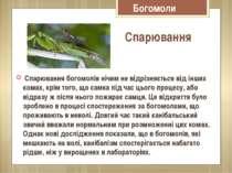 Богомоли Спарювання богомолів нічим не відрізняється від інших комах, крім то...