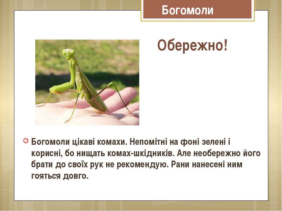 Богомоли цікаві комахи. Непомітні на фоні зелені і корисні, бо нищать комах-ш...