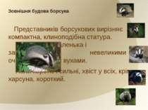Зовнішня будова борсука Представників борсукових вирізняє компактна, клинопод...
