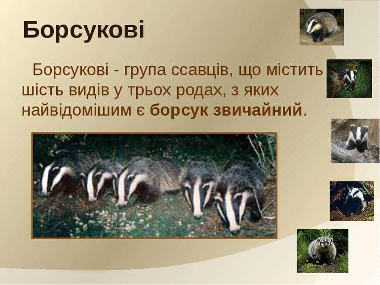 Борсукові - група ссавців, що містить шість видів у трьох родах, з яких найві...