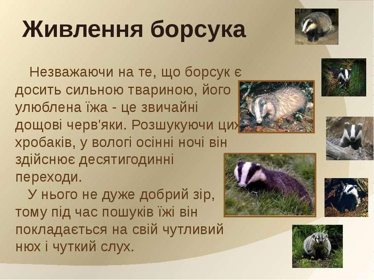 Незважаючи на те, що борсук є досить сильною твариною, його улюблена їжа - це...