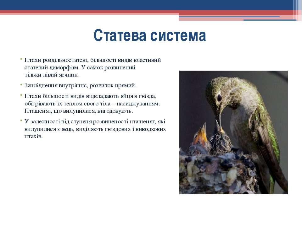 Птахи роздільностатеві, більшості видів властивий статевий диморфізм.У самок...