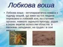 Лобкова воша - ектопаразитична комаха з підряду вошей, що живе на тілі людини...