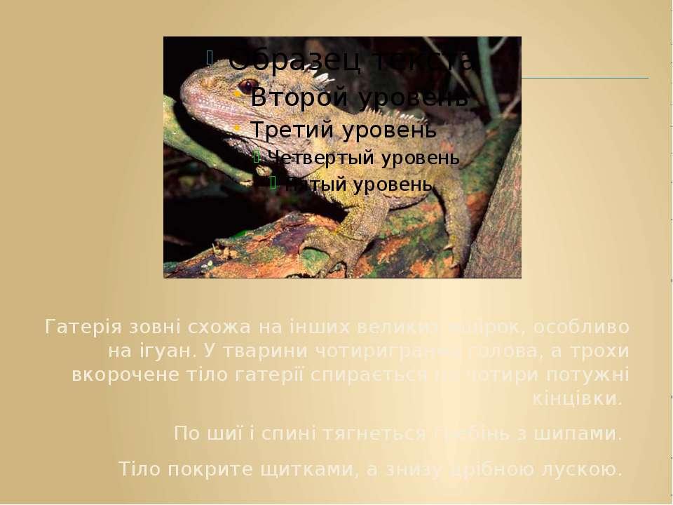 Гатерія зовні схожа на інших великих ящірок, особливо на ігуан. У тварини чот...