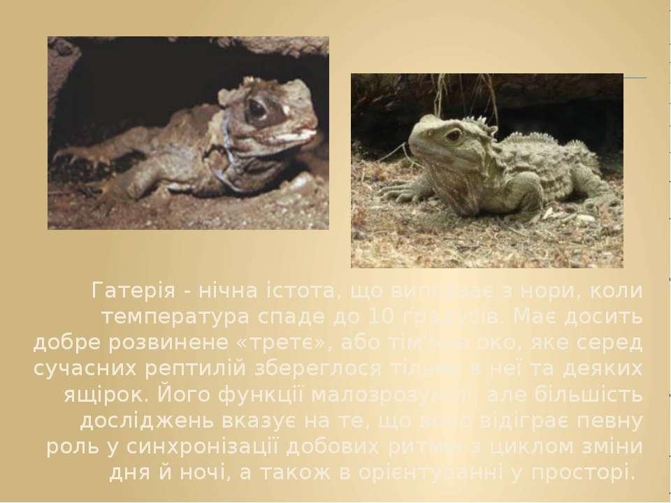 Гатерія - нічна істота, що виповзає з нори, коли температура спаде до 10 град...