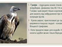 Грифи - підродина хижих птахів родини яструбових. Довжина тіла 95-114 см. Гол...