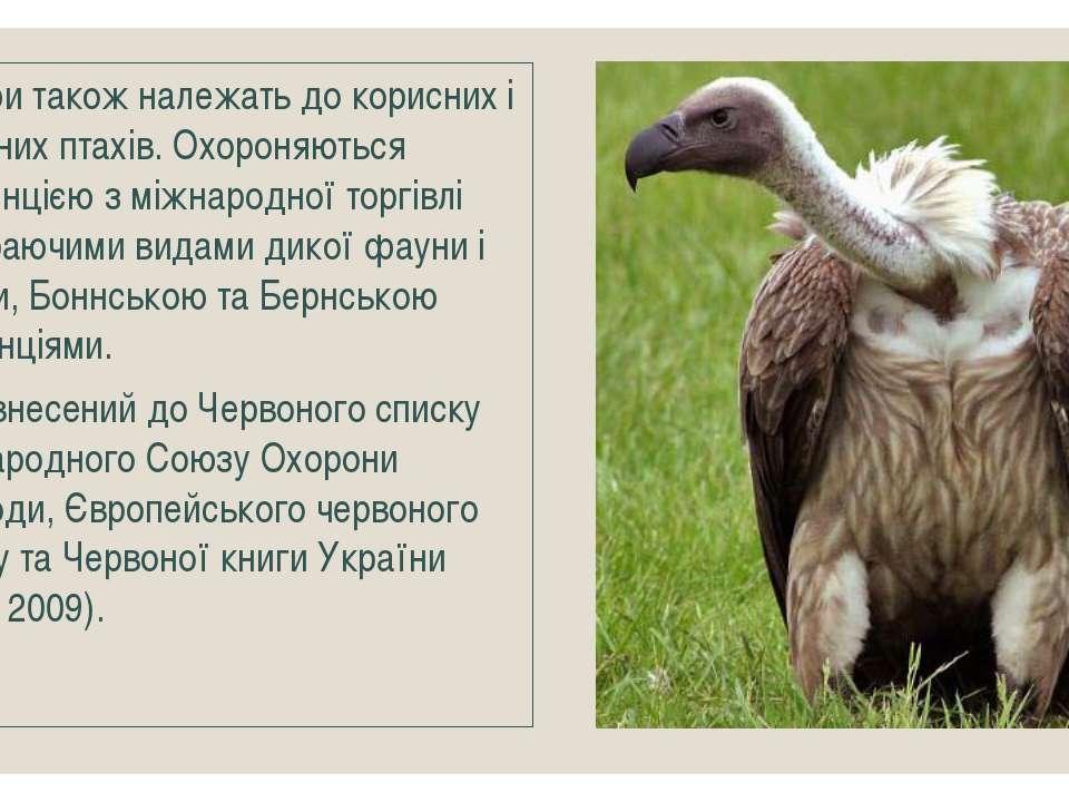Грифи також належать до корисних і рідкісних птахів. Охороняються Конвенцією ...