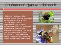 Особливості будови і фізіології Джмелі - холодостійкі комахи. Вони здатні, шв...