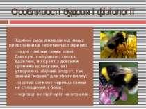 Відмінні риси джмелів від інших представників перетинчастокрилих: - задні гом...