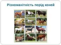 Різноманітність порід коней