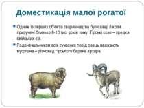 Одним із перших об'єктів тваринництва були вівці й кози, приручені близько 8-...