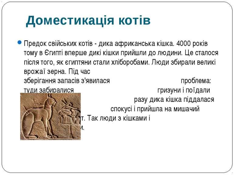 Предок свійських котів - дика африканська кішка. 4000 років тому в Єгипті впе...
