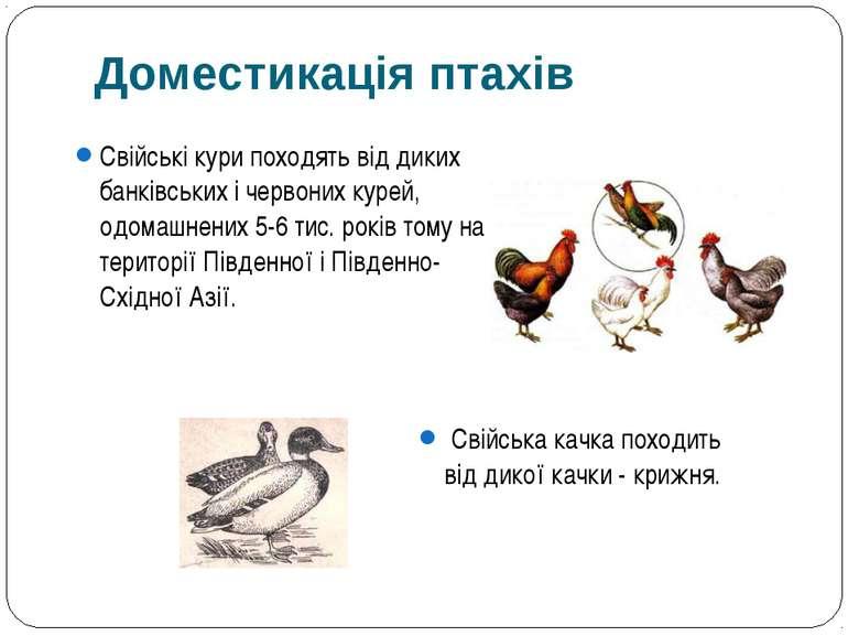 Свійські кури походять від диких банківських і червоних курей, одомашнених 5-...