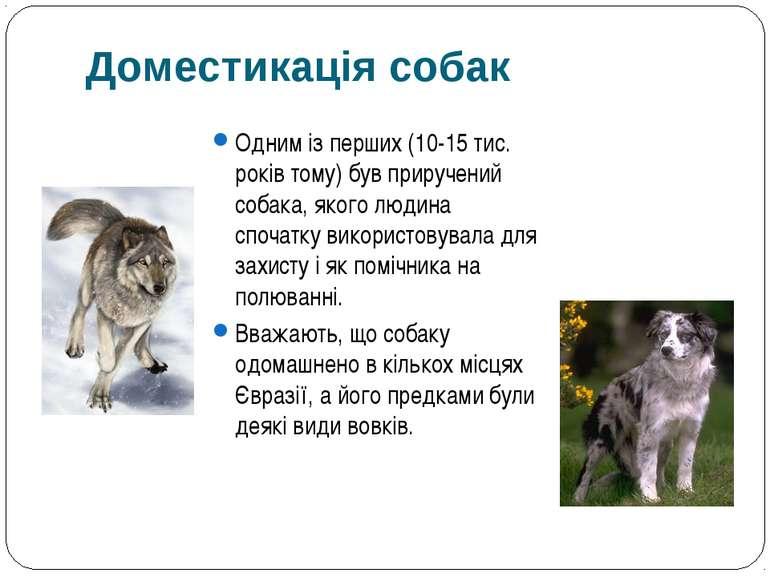 Одним із перших (10-15 тис. років тому) був приручений собака, якого людина с...
