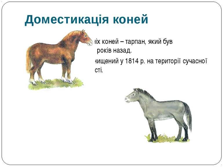 Дикий предок домашніх коней – тарпан, який був одомашнений 5-6 тис. років наз...