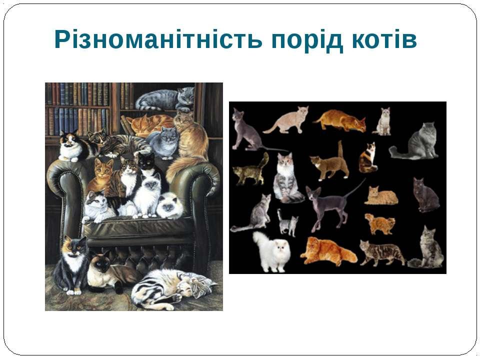 Різноманітність порід котів