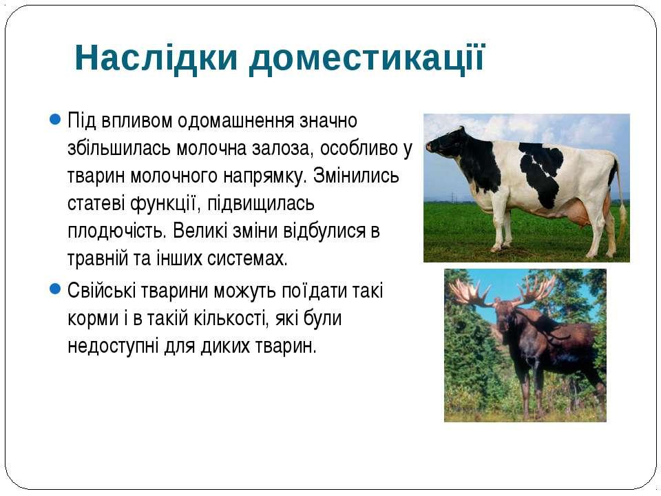 Під впливом одомашнення значно збільшилась молочна залоза, особливо у тварин ...