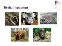 Всеїдні тварини