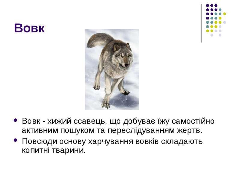 Вовк Вовк - хижий ссавець, що добуває їжу самостійно активним пошуком та пере...