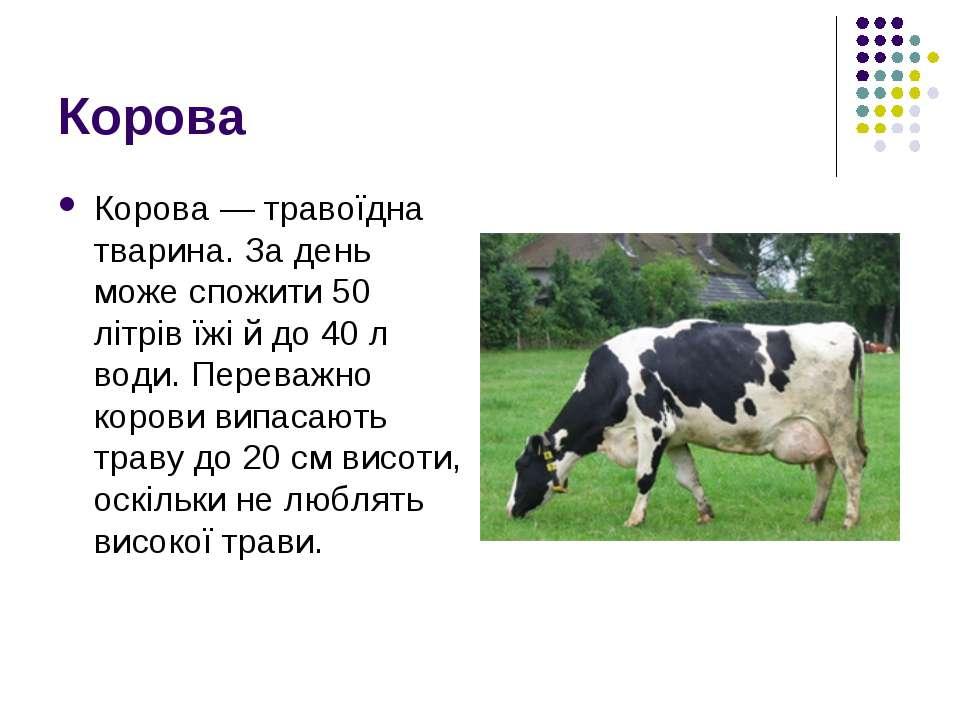 Корова Корова — травоїдна тварина. За день може спожити 50 літрів їжі й до 40...