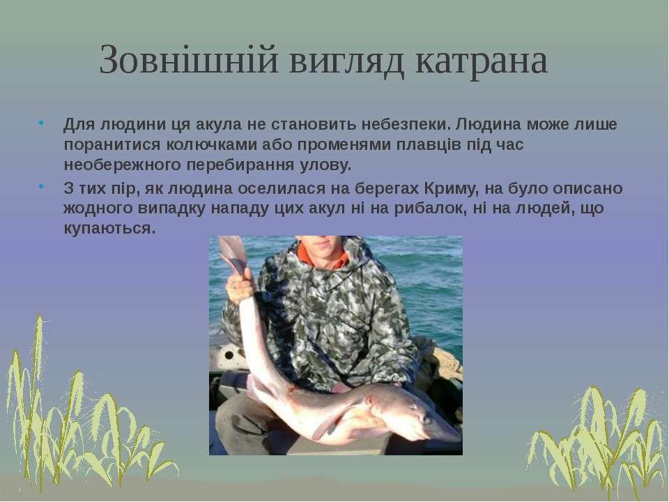Для людини ця акула не становить небезпеки. Людина може лише поранитися колюч...