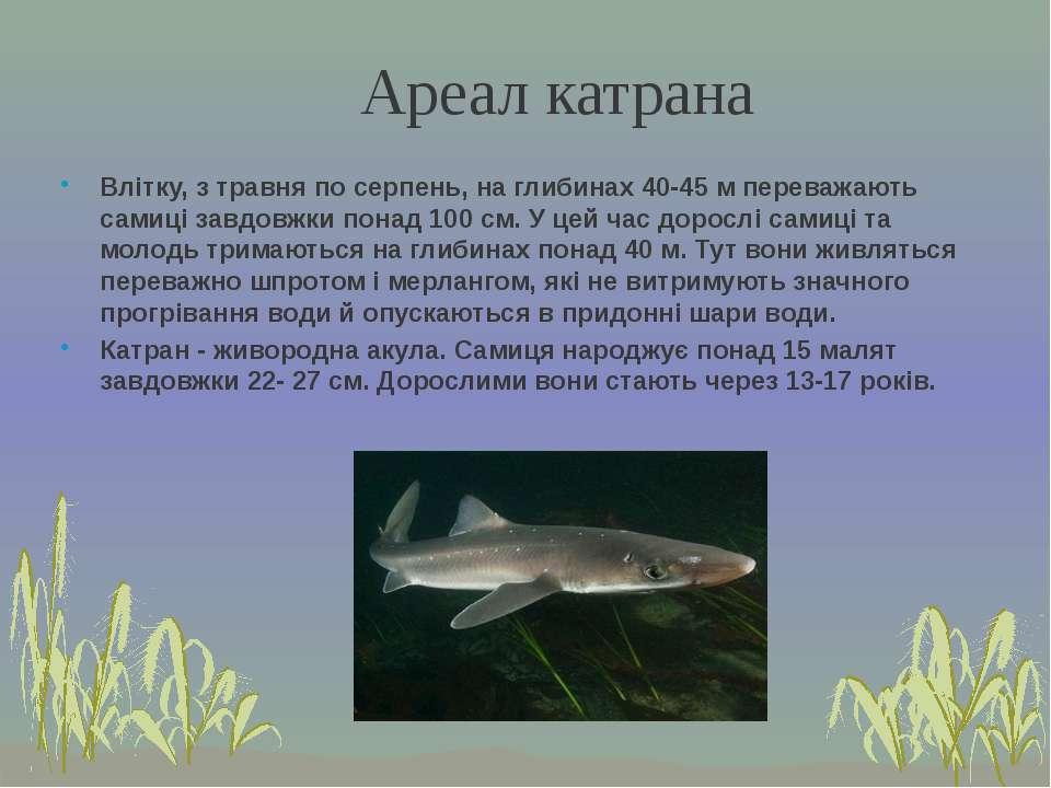 Влітку, з травня по серпень, на глибинах 40-45 м переважають самиці завдовжки...