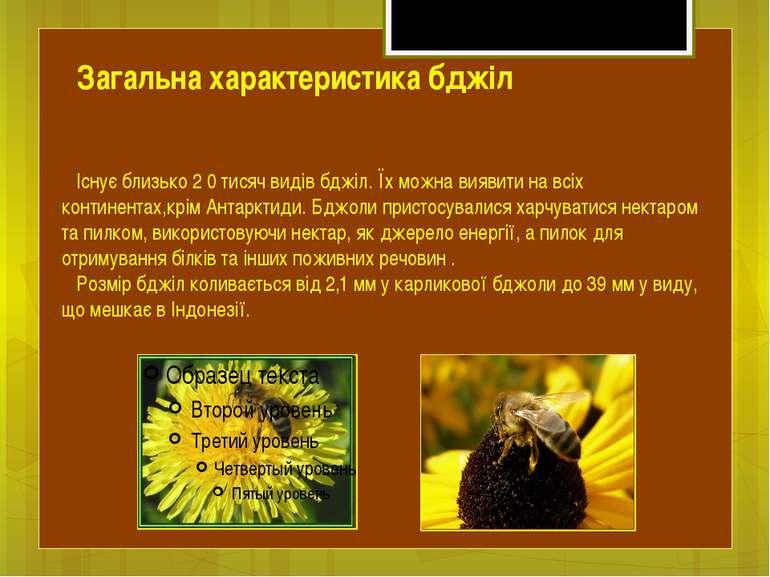 Існує близько 2 0 тисяч видів бджіл. Їх можна виявити на всіх континентах,крі...