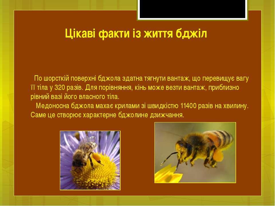 По шорсткій поверхні бджола здатна тягнути вантаж, що перевищує вагу її тіла ...