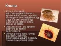 Клоп постільний, абоблощиця постільна- кровосисна комаха, що має сплющене т...