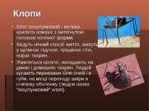 Клоп поцілунковий - велика крилата комаха з витягнутою головою конічної форми...