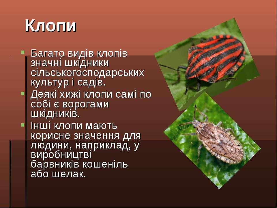 Багато видів клопів значні шкідники сільськогосподарських культур і садів. Де...
