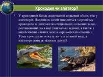 Крокодил чи алігатор? У крокодилів більш досконалий сольовий обмін, ніж у алі...