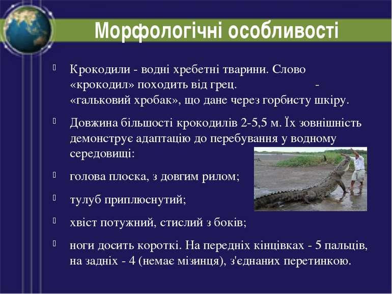 Морфологічні особливості Крокодили - водні хребетні тварини. Слово «крокодил»...