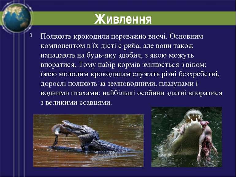 Живлення Полюють крокодили переважно вночі. Основним компонентом в їх дієті є...