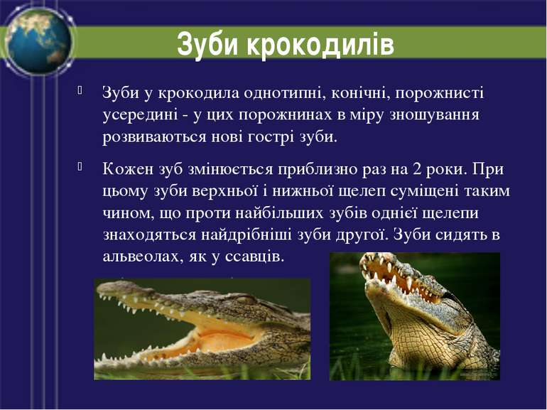 Зуби крокодилів Зуби у крокодила однотипні, конічні, порожнисті усередині - у...