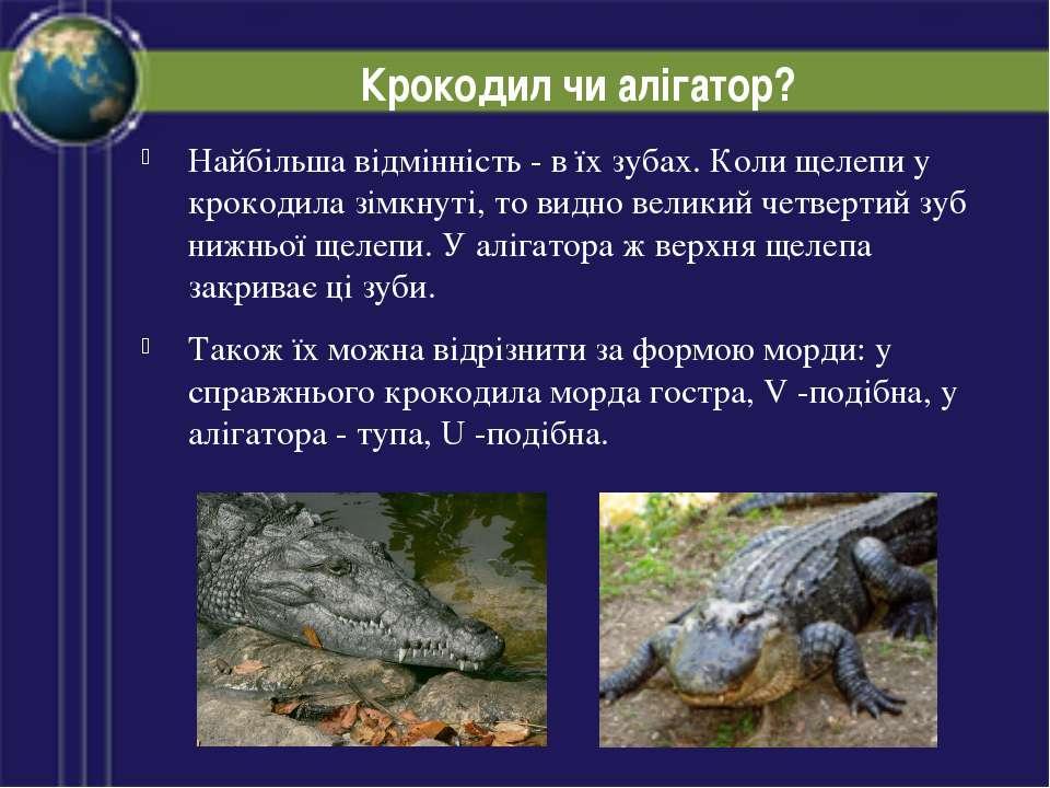 Крокодил чи алігатор? Найбільша відмінність - в їх зубах. Коли щелепи у кроко...