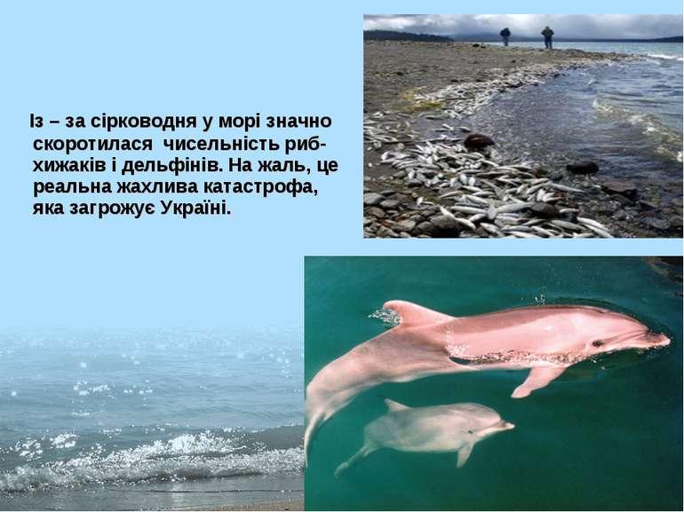 Із – за сірководня у морі значно скоротилася чисельність риб-хижаків і дель...