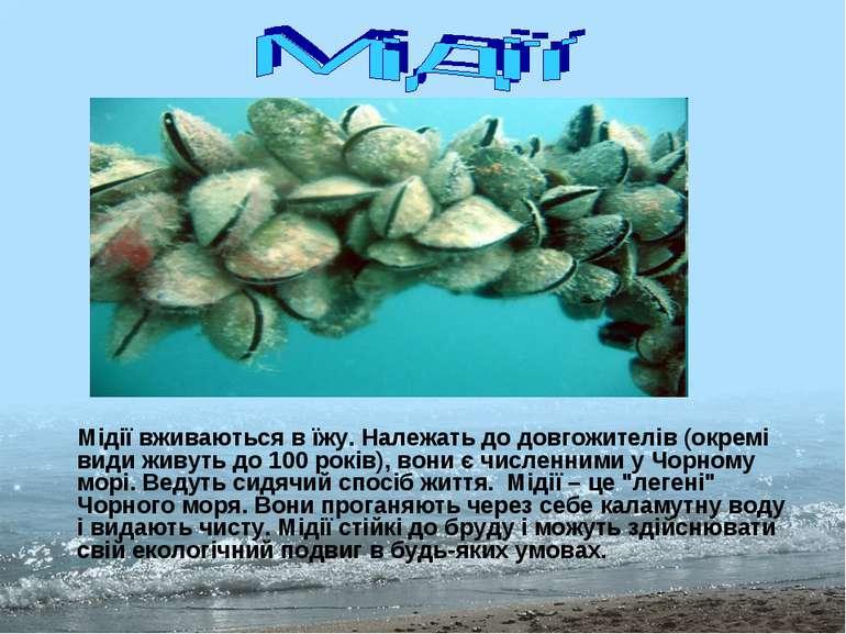 Мідії вживаються в їжу. Належать до довгожителів (окремі види живуть до 100 р...