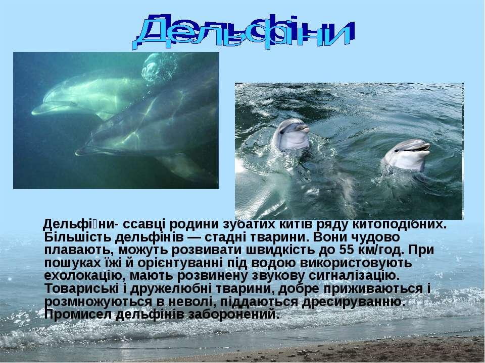 Дельфі ни- ссавці родини зубатих китів ряду китоподібних. Більшість дельфінів...