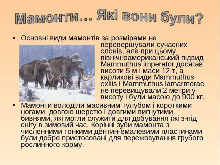 Основні види мамонтів за розмірами не перевершували сучасних слонів, але при ...
