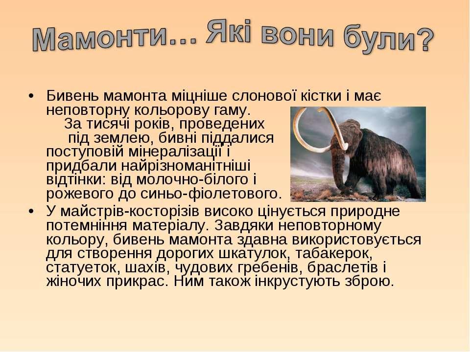 Бивень мамонта міцніше слонової кістки і має неповторну кольорову гаму. За ти...