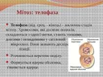 Телофаза (від. грец. - кінець) - заключна стадія мітозу. Хромосоми, які досяг...