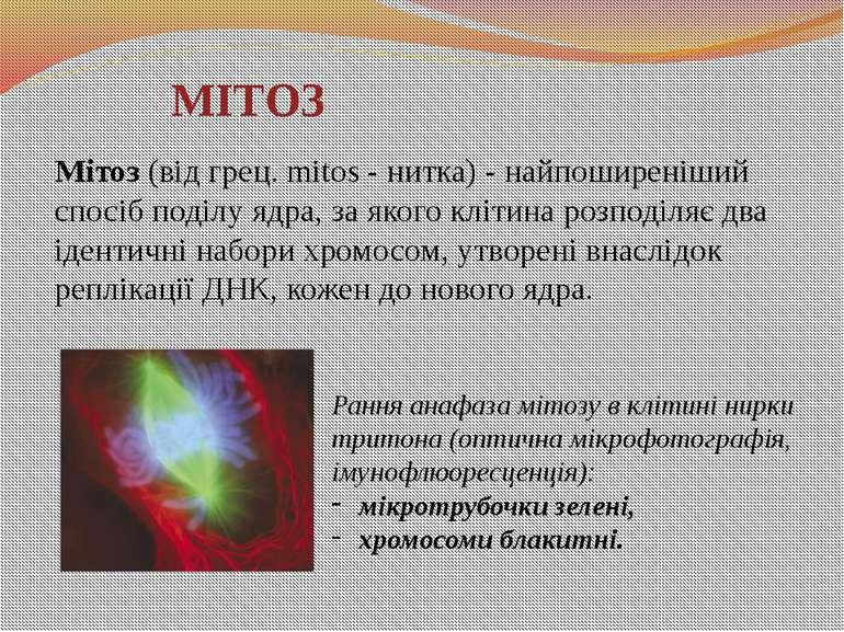 МІТОЗ Мітоз (від грец. mitos - нитка) - найпоширеніший спосіб поділу ядра, за...