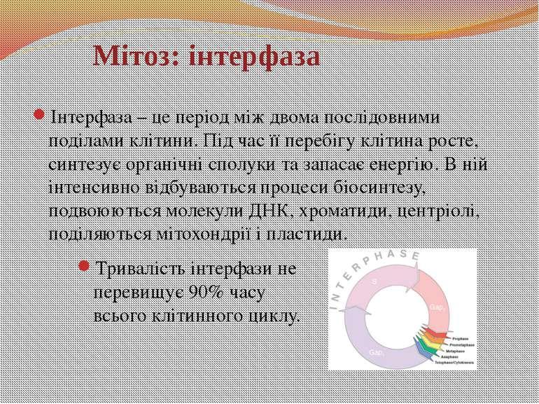 Мітоз: інтерфаза Інтерфаза – це період між двома послідовними поділами клітин...