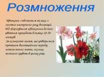 Квітконіс з'являється тільки з листям наступного року вегатаціі. Від формуван...