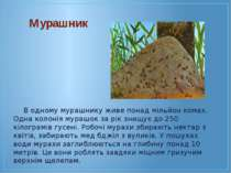 В одному мурашнику живе понад мільйон комах. Одна колонія мурашок за рік знищ...